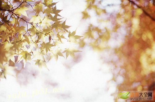 七夕爱情短信