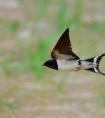 关于燕子爱情的诗句 用燕子比喻爱情的诗句