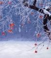 小寒花事安排 薄雪,花不冷,酒不温