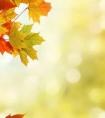 秋天的句子短句唯美 句句优雅,让人忍不住收藏