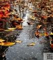 关于描写秋雨绵绵的唯美句子8句