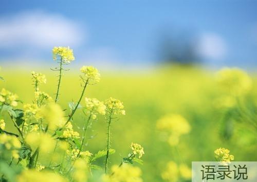 喜欢春天的句子 形容春天的句子唯美