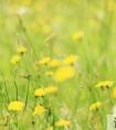 关于喜欢春天的句子25句
