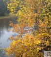 关于表现凄凉的秋雨句子30句