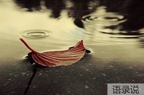 描写秋雨的优美句子 人在风雨中聚散不由我