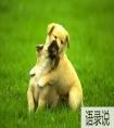关于狗狗名字吉利好运财旺大全